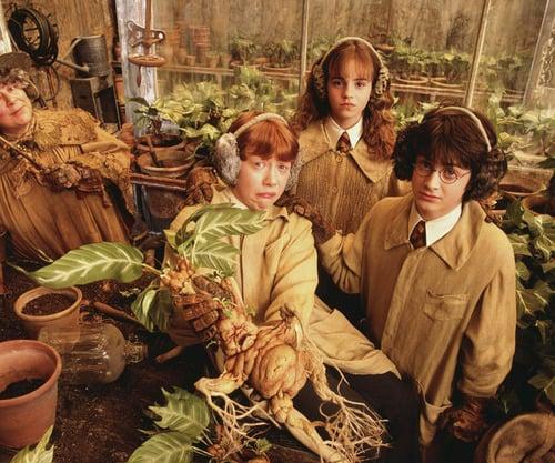Pottermore Test : Dans Quelle Maison De Harry Potter Es-Tu ? 16